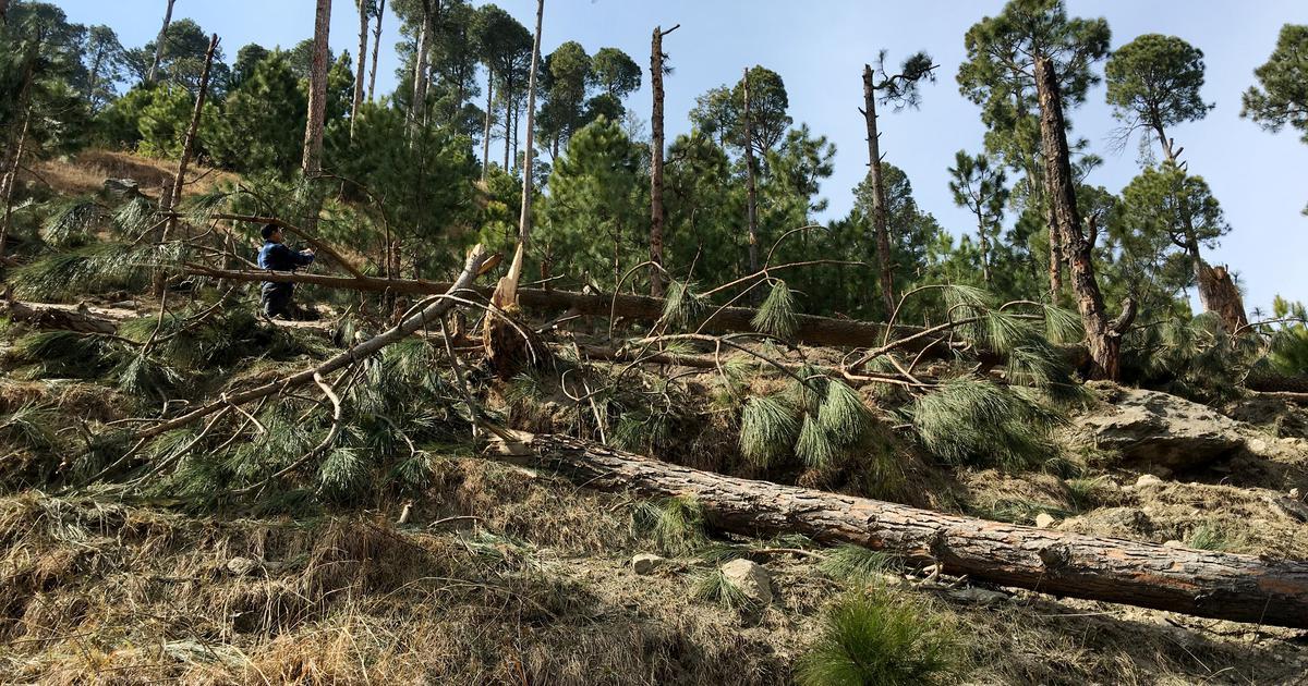 पाकिस्तान : पेड़ों पर बम गिराने के लिये भारतीय वायुसेना के खिलाफ एफआईआर दर्ज