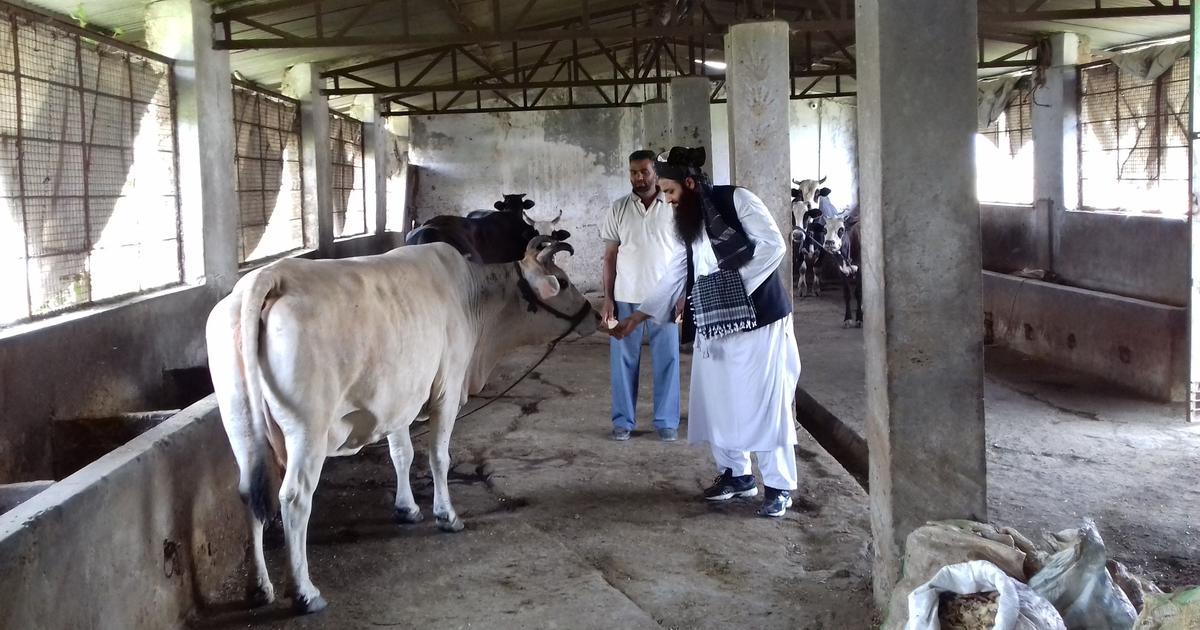 मुसलमान बकरीद पर गाय की कुर्बानी नहीं दें : यूनाइटेड मुस्लिम फोरम