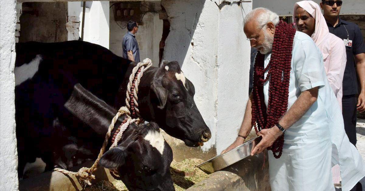 भारतीय संस्कृति और परंपरा में गायों का विशेष महत्व रहा है : नरेंद्र मोदी