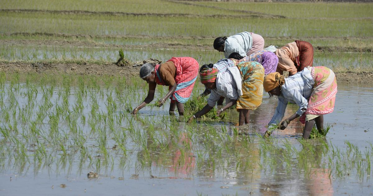 Farm labourers in Punjab drugged, exploited, alleges Centre, farmer leaders criticise letter