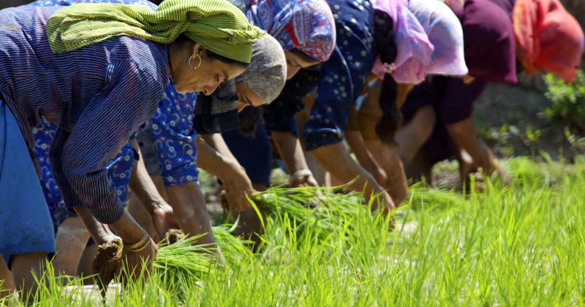 कमजोर मानसून के चलते अब तक खरीफ फसलों की बुआई काफी कम होने सहित आज की प्रमुख सुर्खियां