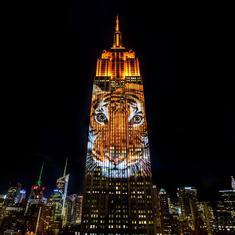 क्या बाघिन 'अवनी' को न्यूयॉर्क की मशहूर इमारत 'एम्पायर स्टेट बिल्डिंग' पर श्रद्धांजलि दी गई थी?