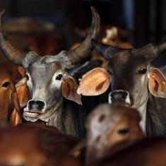 Cow-related violence has scuttled India's beef, leather exports and eroded incomes, says new report